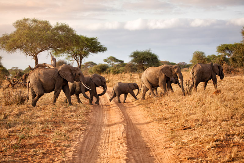 Comfort and Clarity: What a Trip to Africa Can Offer You - travel-gadgets