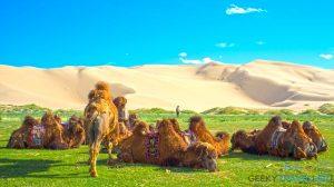 Mongolia trip